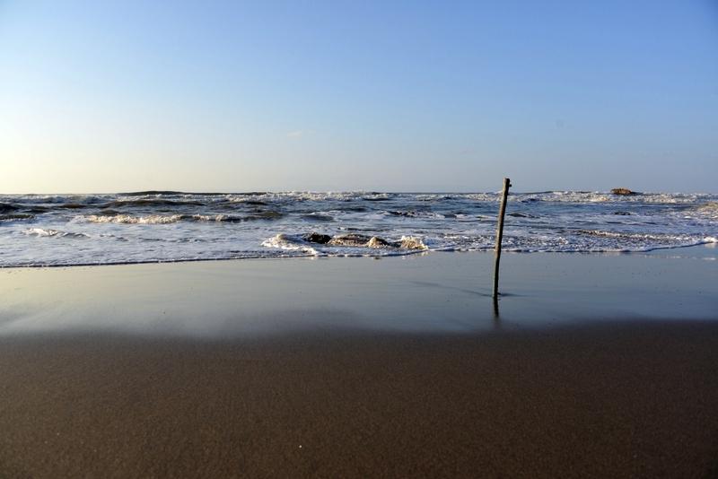 浜辺に木-2