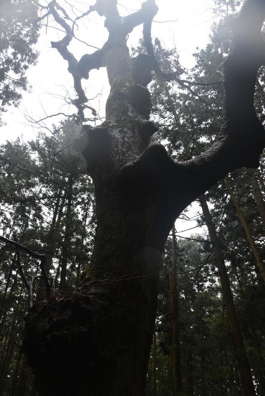 冬の木と松枯れ-2