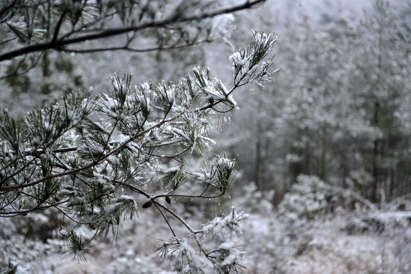 雪景色-5