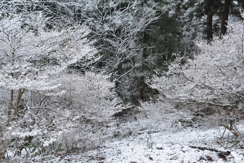 雪化粧-2-1
