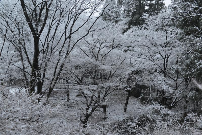雪化粧-2-2