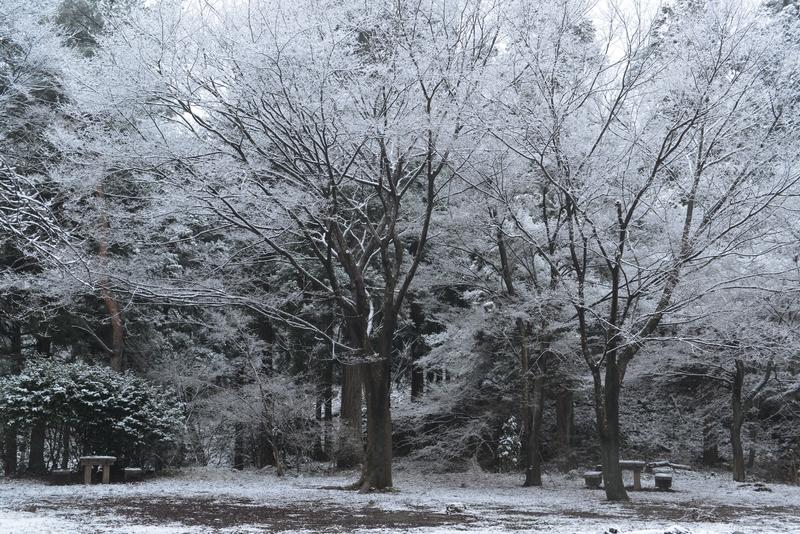 雪化粧-2-3