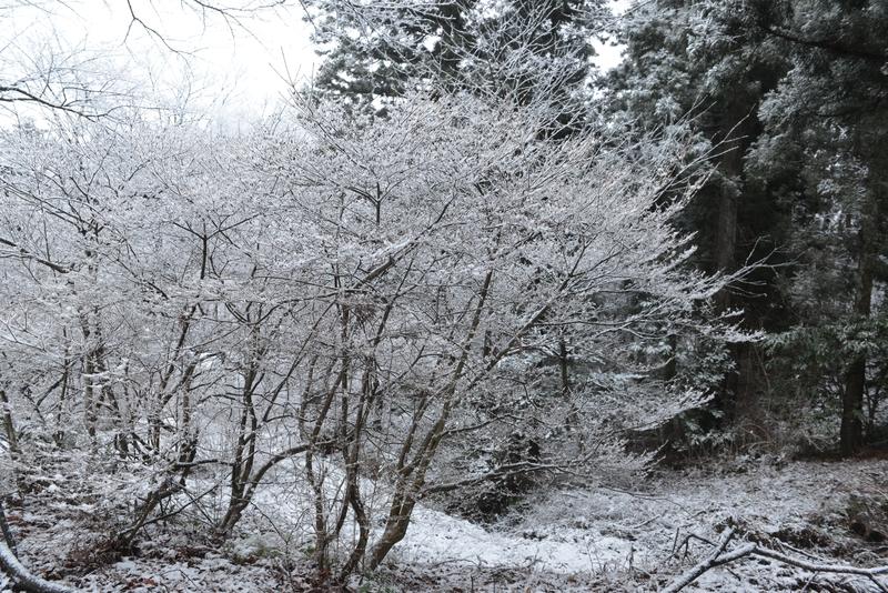 雪化粧-2-4