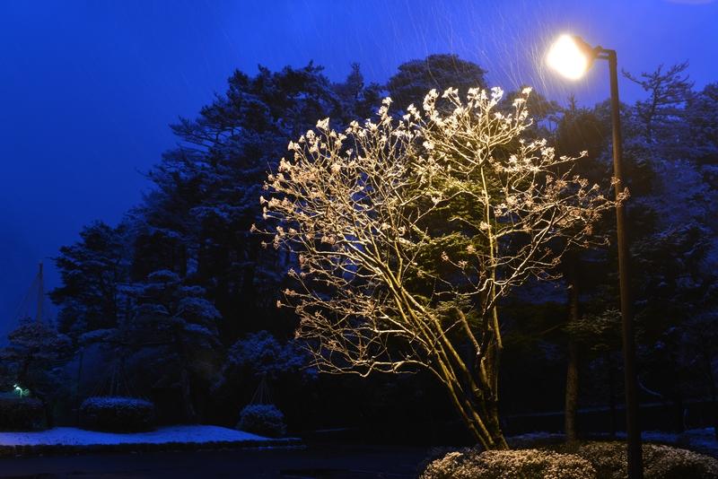 雪化粧 ライトアップ-2