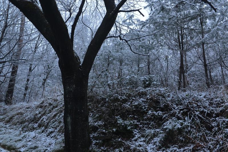 雪化粧 公園-4
