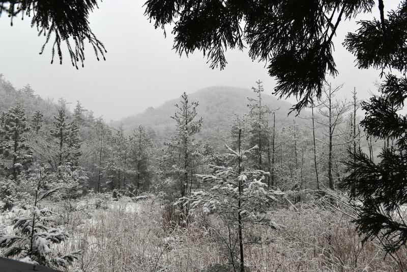 本格的な雪-1