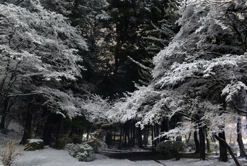 本格的な雪-2