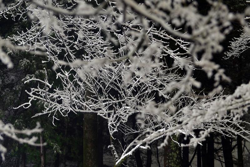 本格的な雪-4