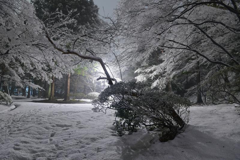 雪の公園 街灯-3