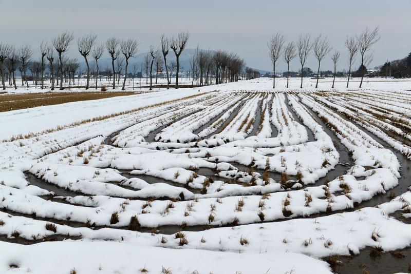 雪の水田-1