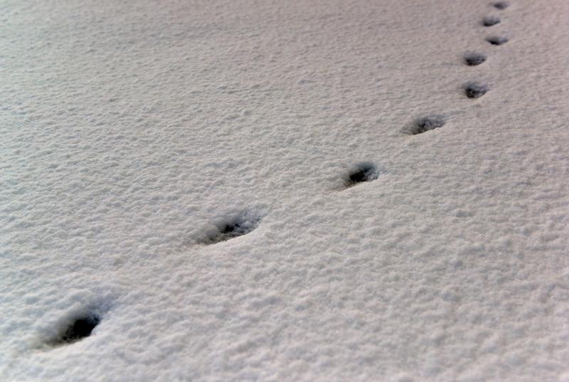 昼時の雪-2