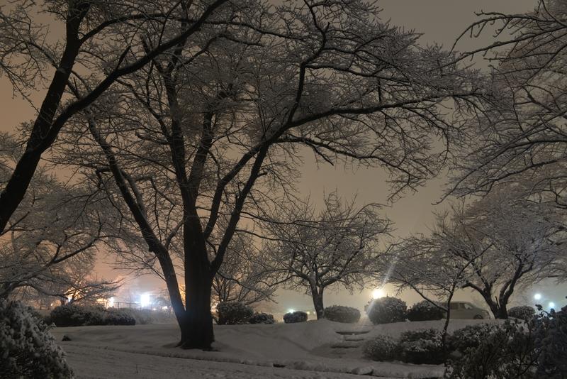 雪の公園 夜-1