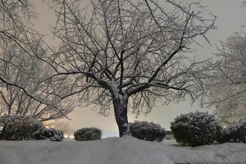 雪の公園 夜-4