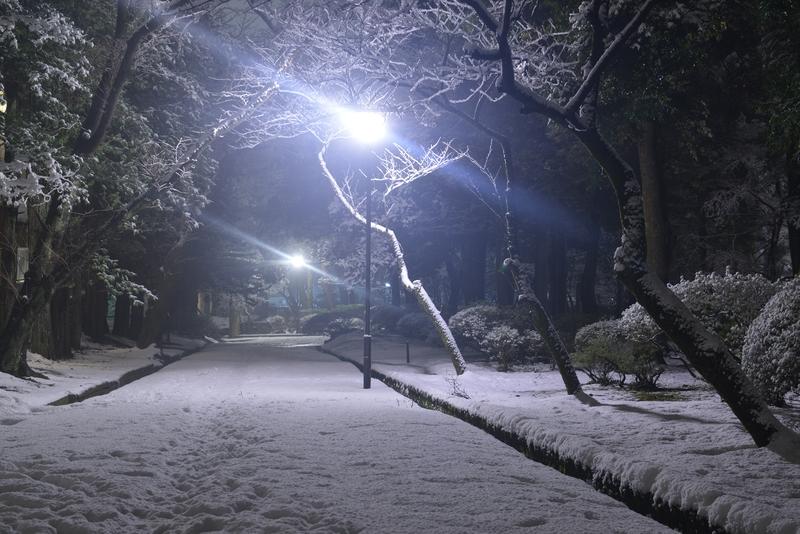 雪の公園 夜-3