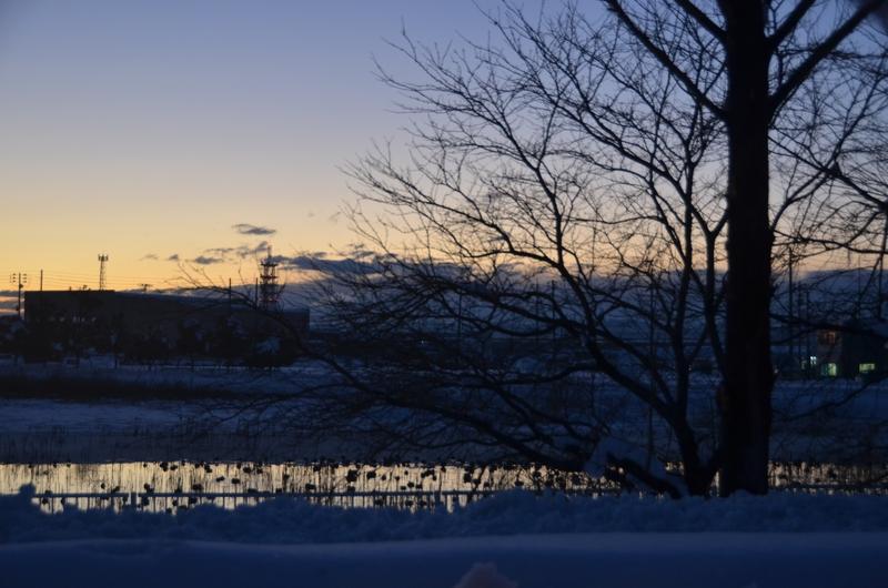雪景色の樹-1