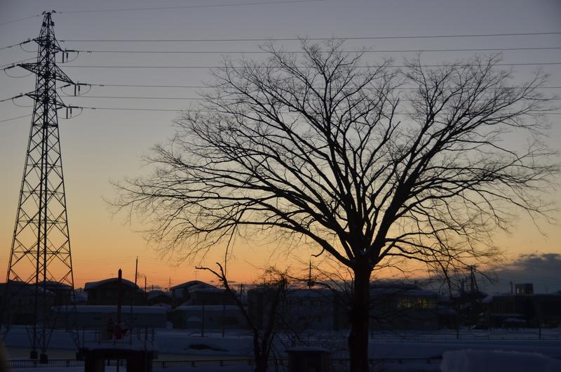 雪景色の樹-2