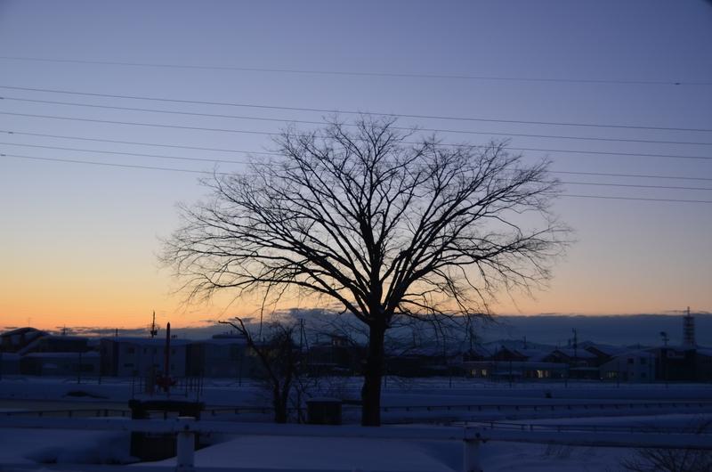 雪景色の樹-3