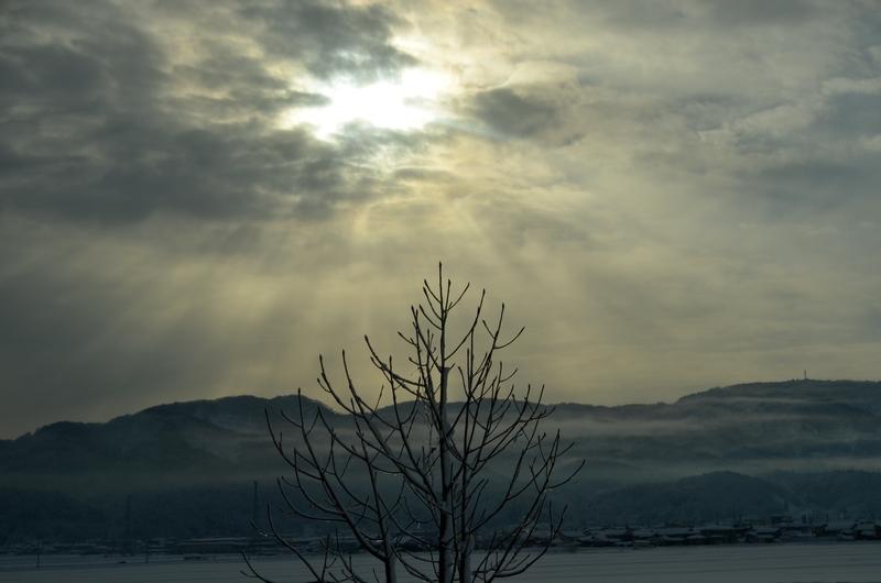 雪景色の樹-4