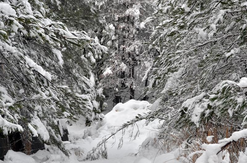 雪の重み-1