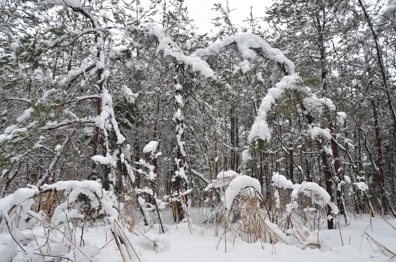 雪の重み-2