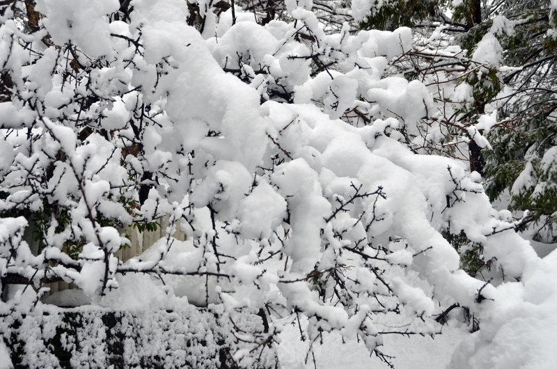 雪の重み-3