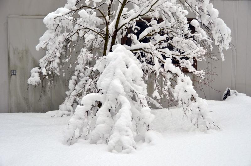 雪の重み-4