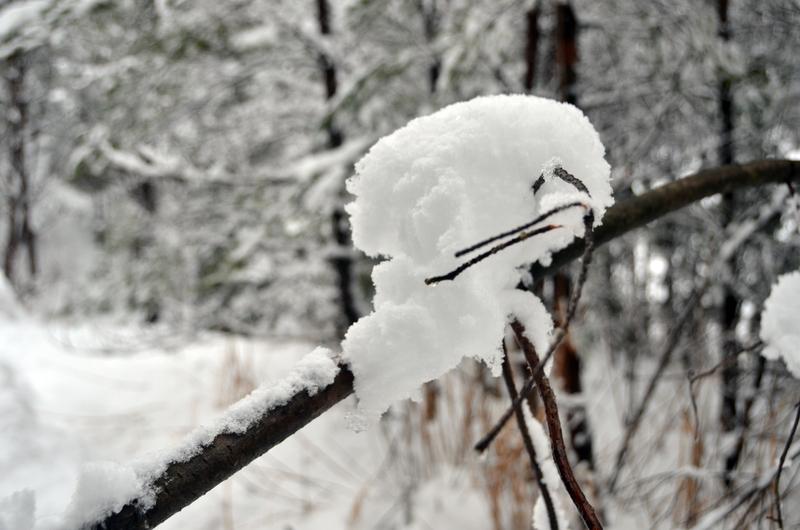 雪の重み-5