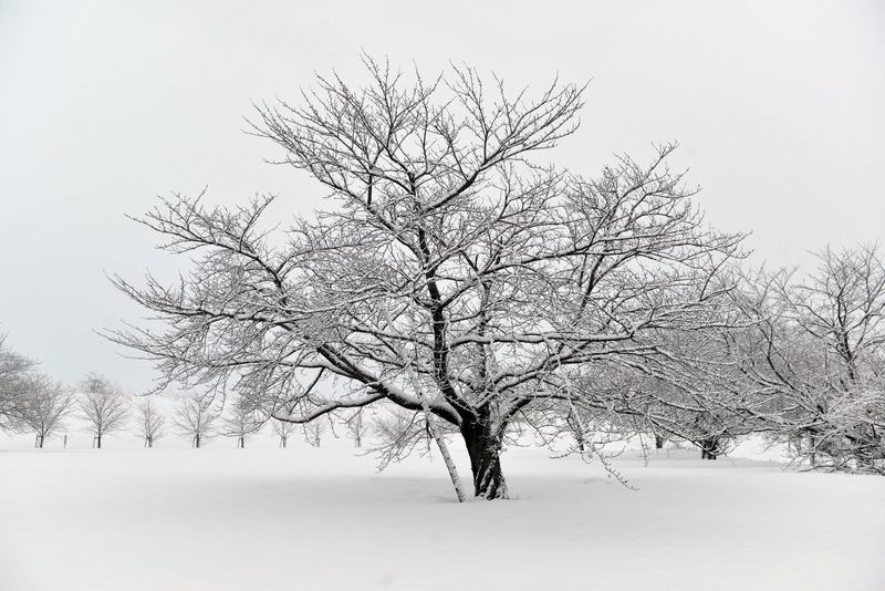 雪の朝-3