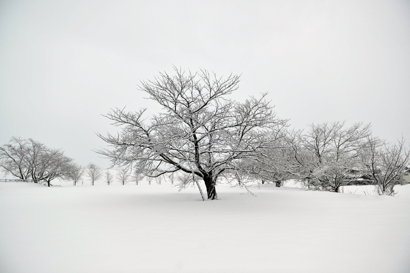 雪の朝-4