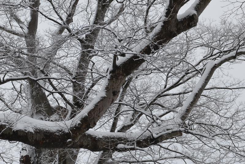 朝の雪-3
