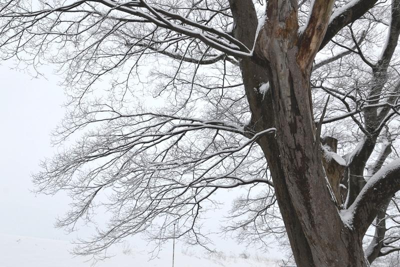 朝の雪-4