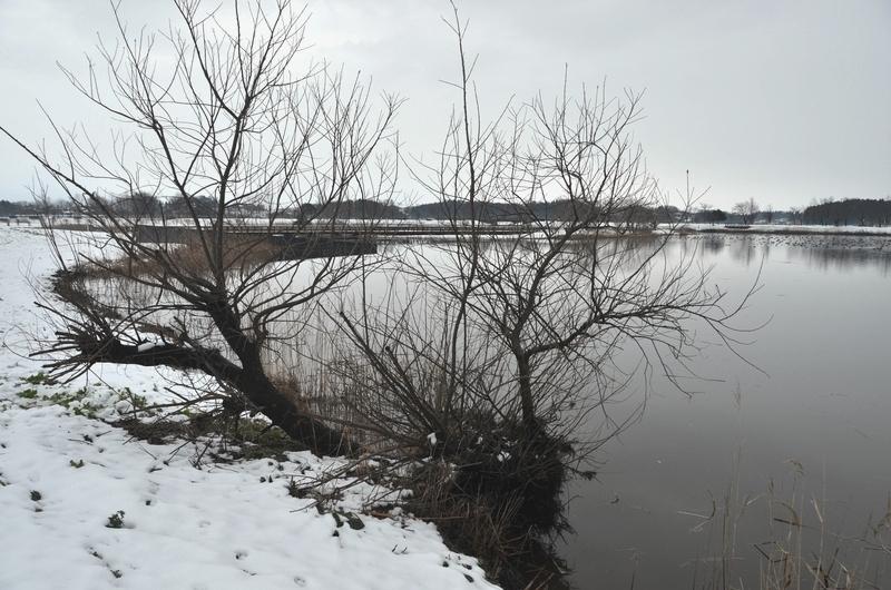 冬 水辺の木-1