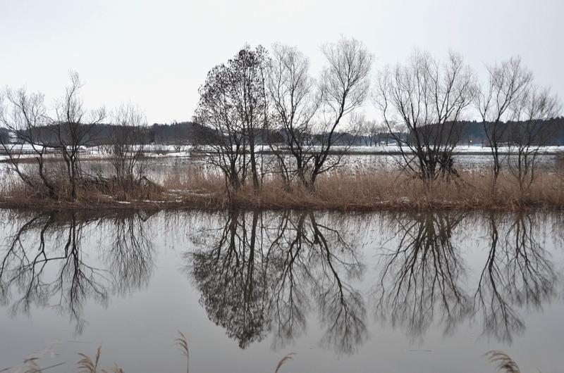 冬 水辺の木-2