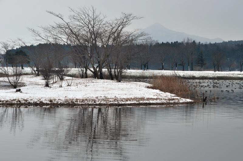 冬 水辺の木-4