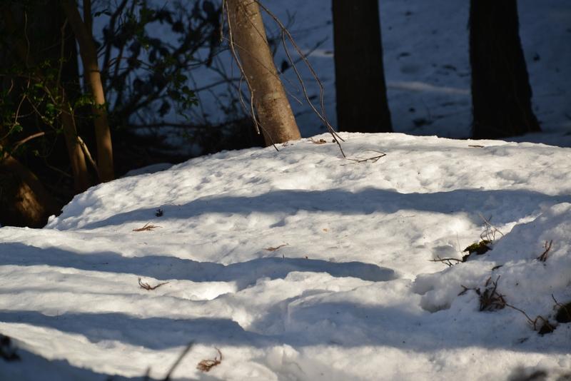 雪と木と-1