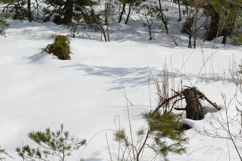 雪と木と-3