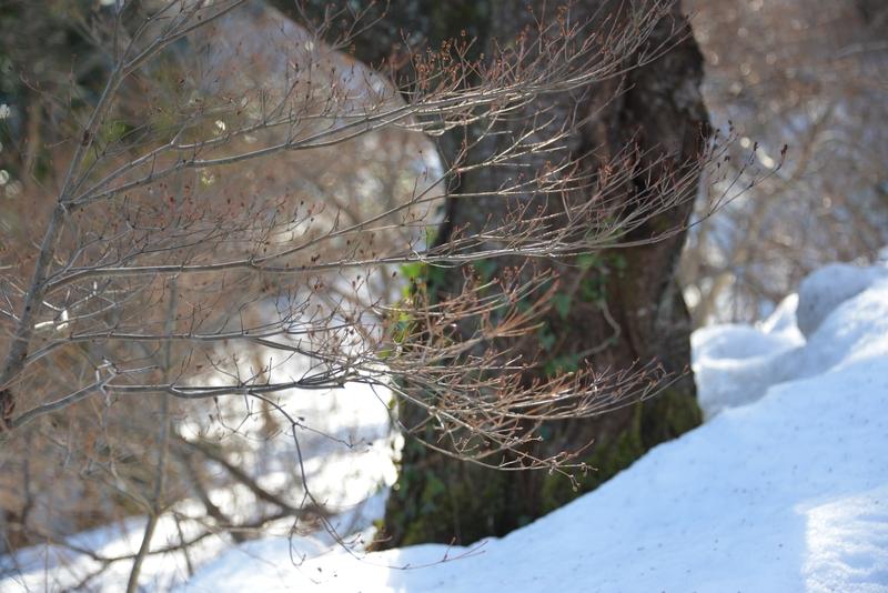 雪と木と-4