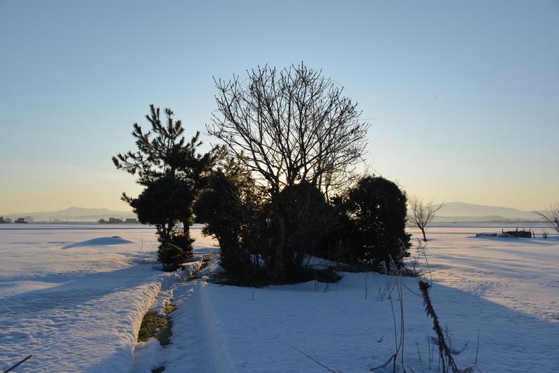 雪原の朝-1