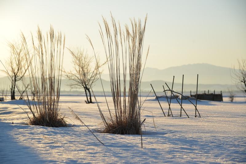 雪原の朝-4
