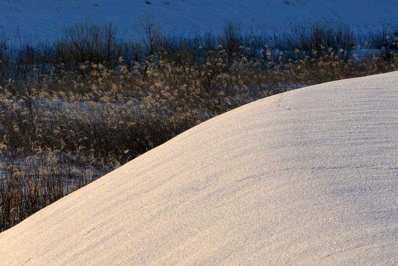 雪と枯れすすき-4