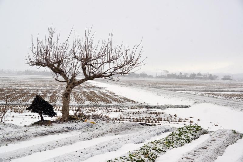 朝の雪 畑-1