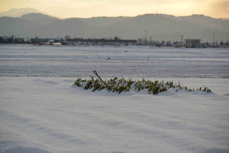 雪の朝日-4