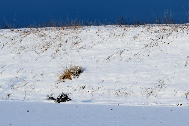 雪の土手-3