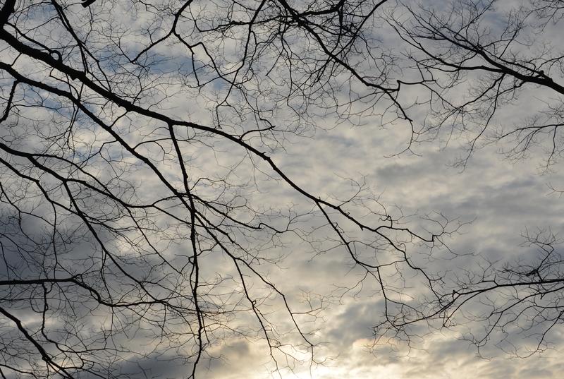 朝の枝-2