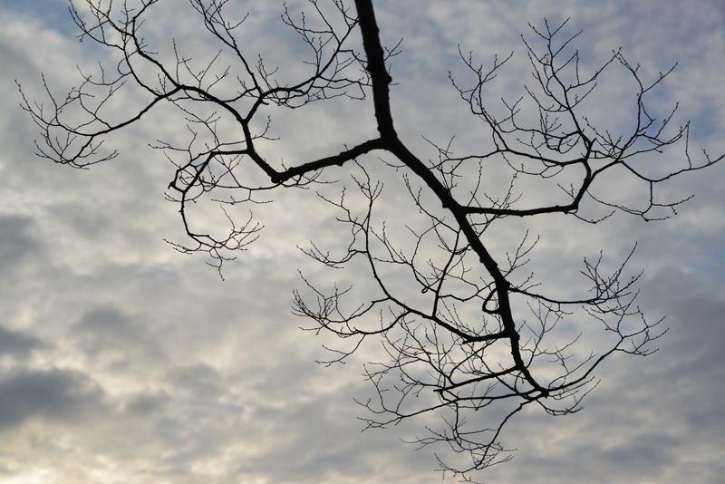 朝の枝-3