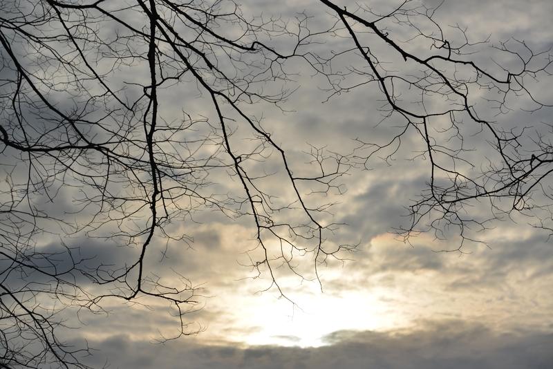 朝の枝-4