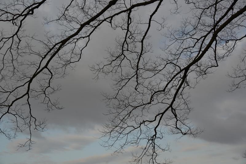 朝の枝-5