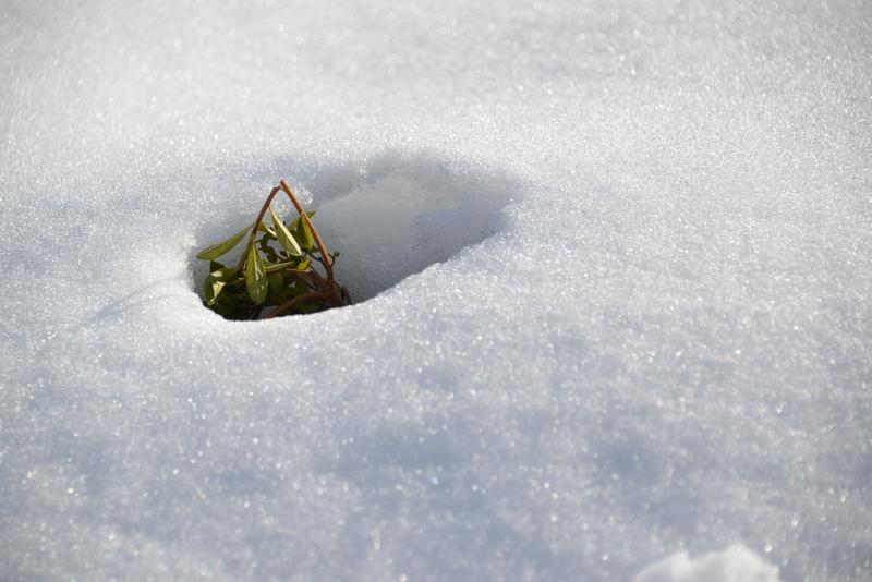 雪から顔を-1