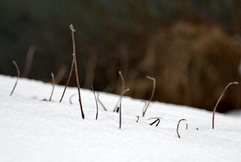 雪から顔を-3
