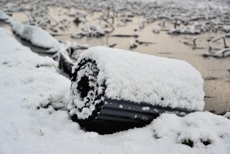 レンコン畑の雪-3